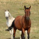 Haras colline cheval